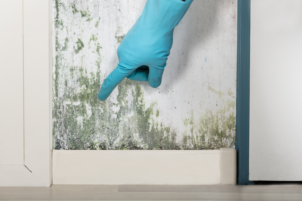 Person Showing The Wall Covered With Lichen