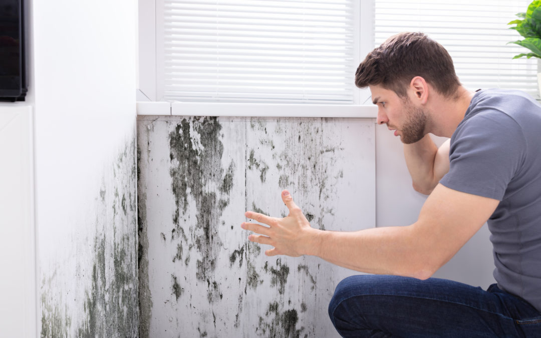 Cleaning And Removing Mold Contamination